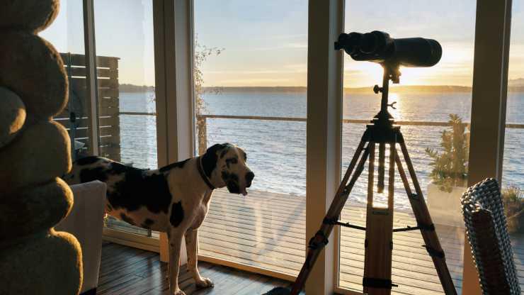 cane casa al mare
