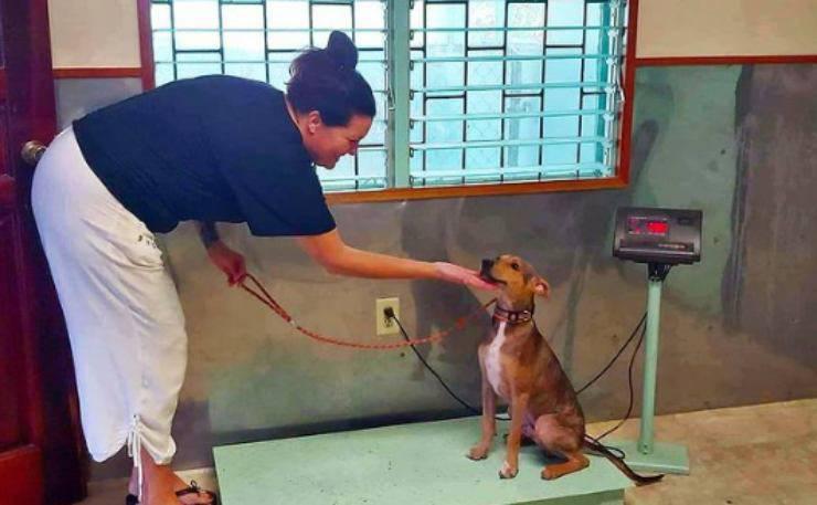 Il cane curato (foto Instagram)