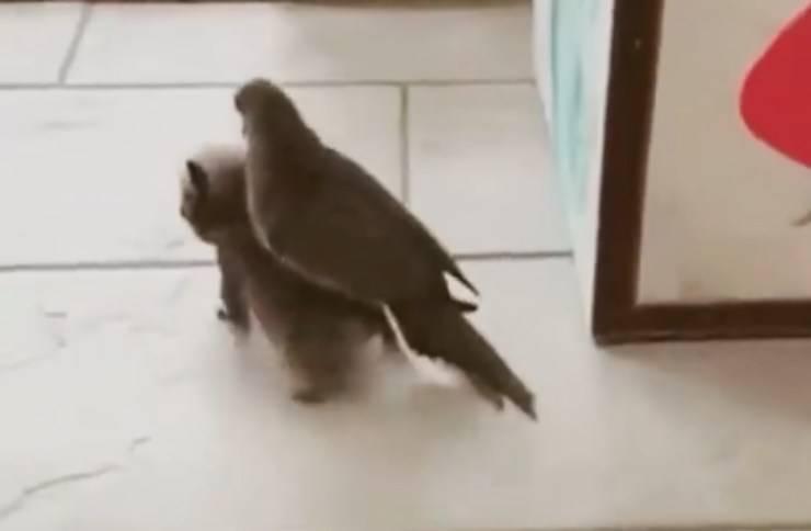 Piccione in groppa al cane (Foto video)