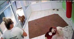 Cane incastrato nella ciotola (screen Video)