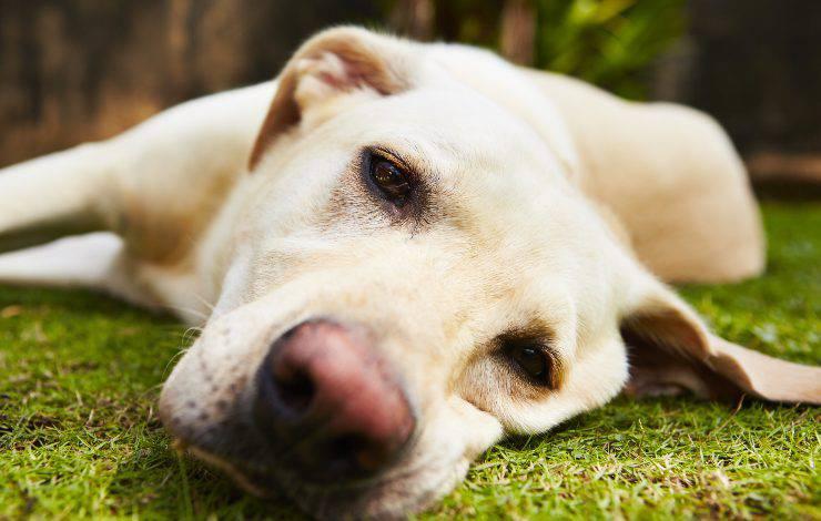 piante tossiche cane