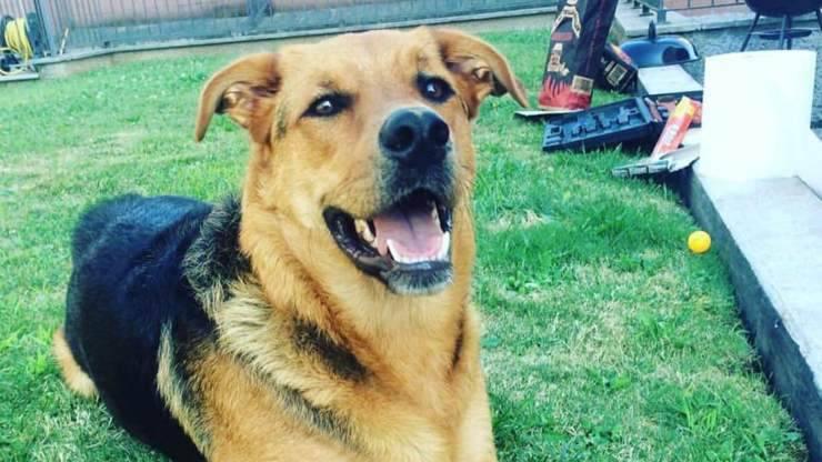 cane muore di overdose