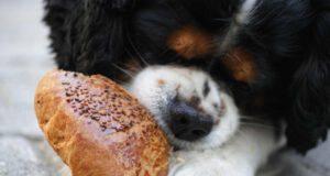 cane può mangiare semi di sesamo