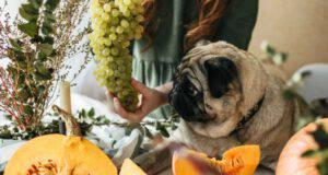cane può mangiare semi zucca