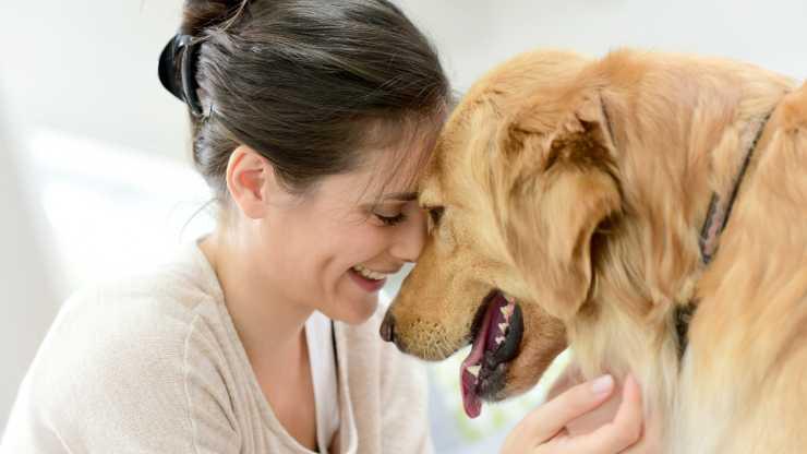 cani percepiscono nostre intenzioni