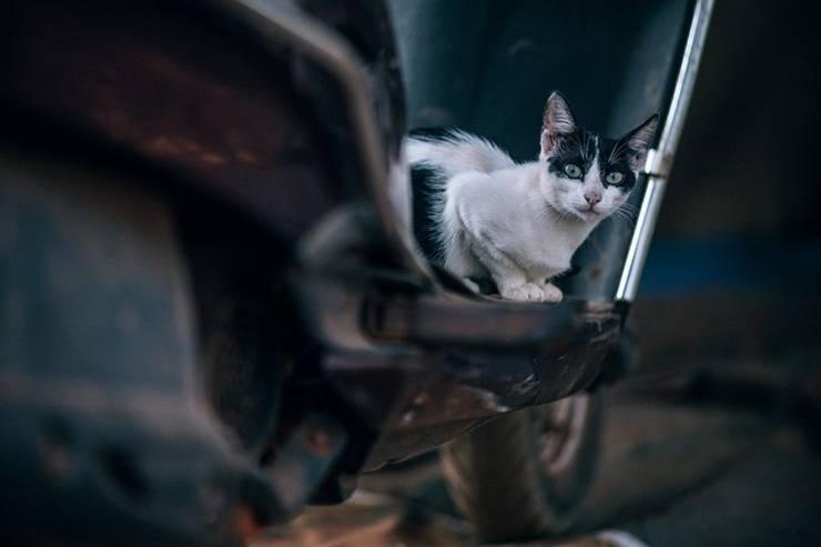 gatto abbandonato senza cibo ne acqua in casa (Foto Pixabay)