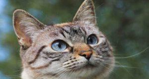 Gatto in primo piano (Foto Pixabay)