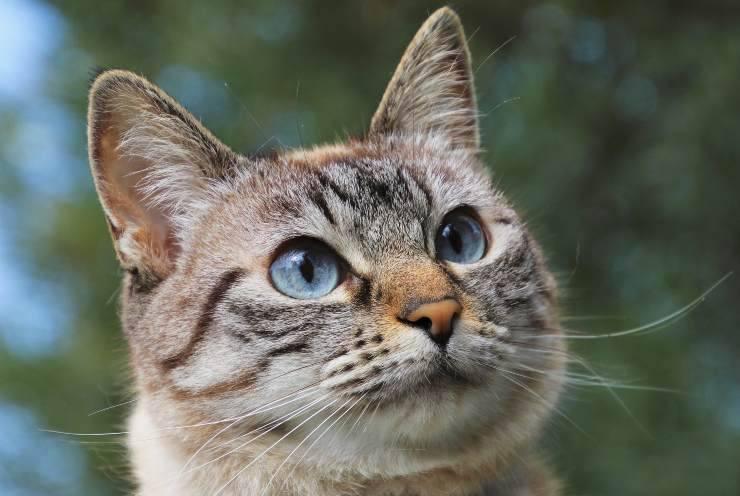 Revertor per gatti