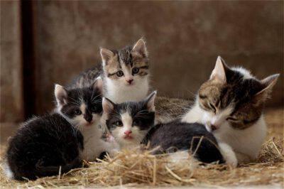 Gattini da soli