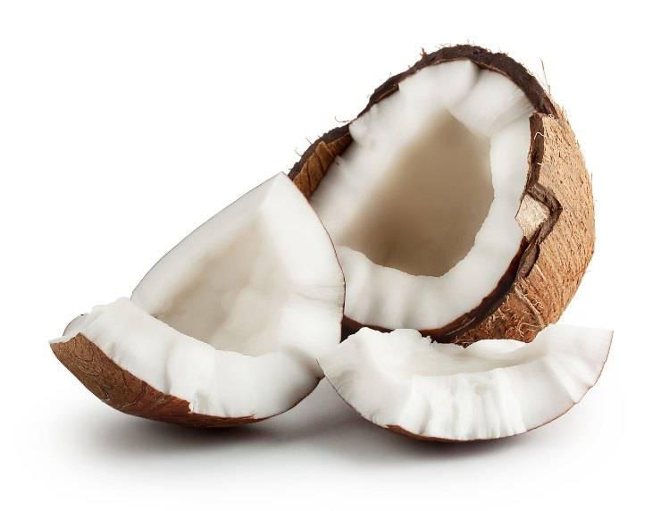 Fido può mangiare il cocco