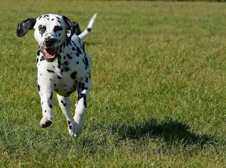 Cani che hanno bisogno di esercizio