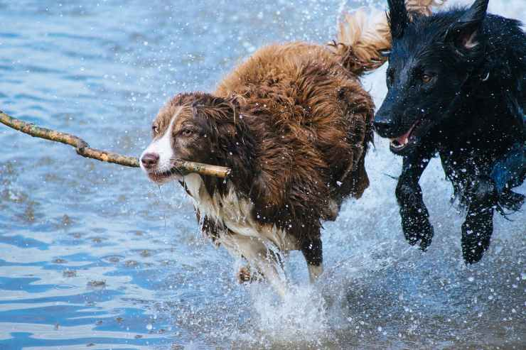 Cani che hanno più bisogno di esercizio fisico