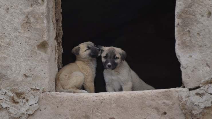 Cuccioli abbandonati (Foto Pixabay)