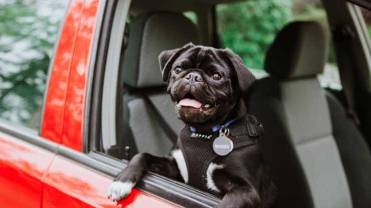 dove si sente a suo agio cane in auto