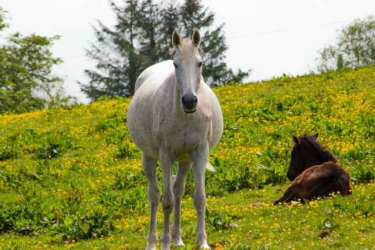 Rinfrescare il cavallo quando ha caldo