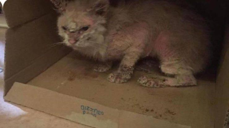 Gatto malato e triste (Foto facebook)