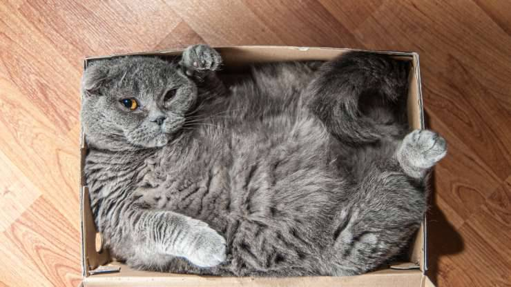 gatti sono liquidi