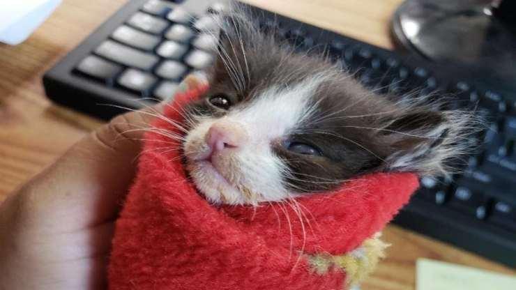 Il gattino ritrovato (foto Facebook)