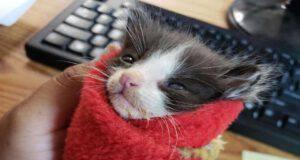 Gattino avvolto nella coperta (Foto Facebook rifugio)