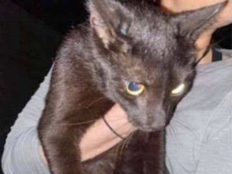 Trovato il gatto tra le macerie del palazzo di Miami (Foto Facebook)