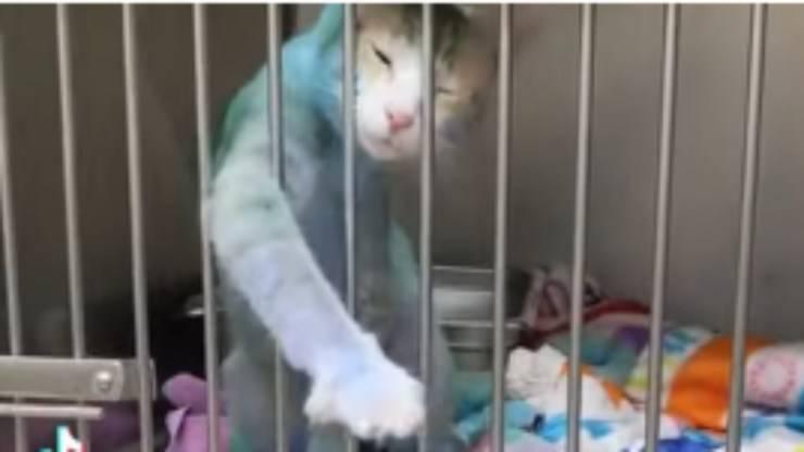 Il gatto dipinto di blu (Foto video)
