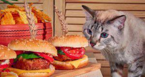 gatto può mangiare semi sesamo