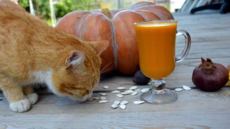 gatto può mangiare semi zucca