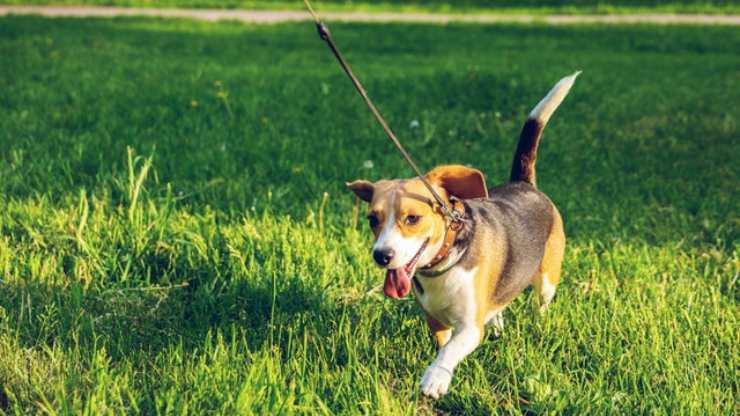giochi da fare con cane passeggiate