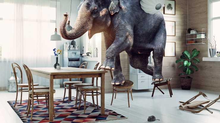 gli elefanti hanno paura dei topi