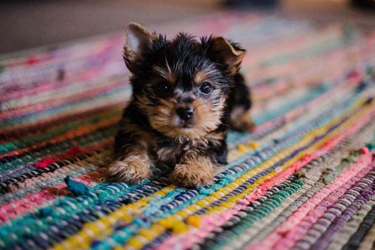 Come vive il cane epilettico