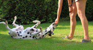 insegnare al cane a rotolare