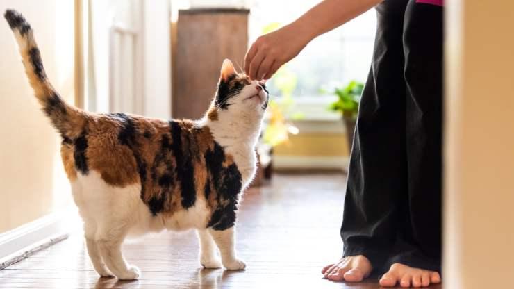 insegnare al gatto a fare il morto