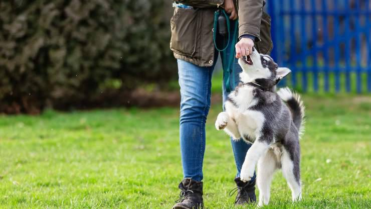 insegnare slalom tra gambe al cane