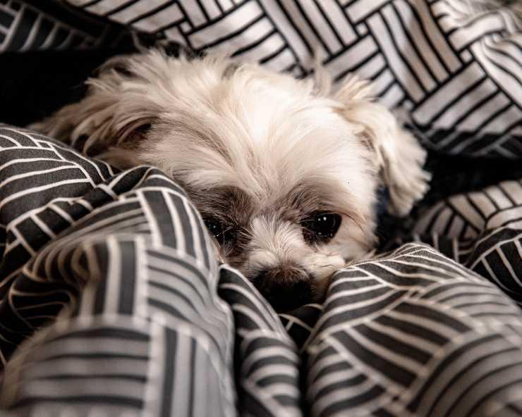 Il cane e l'atteggiamento di notte