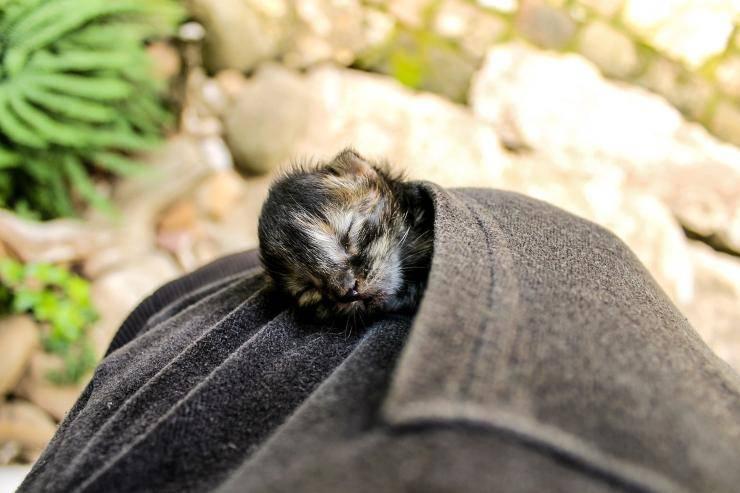 gattino abbandonato cordone ombelicale orentano