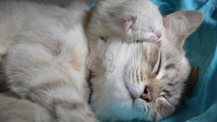 Mamma gatta nell'educazione del gattino