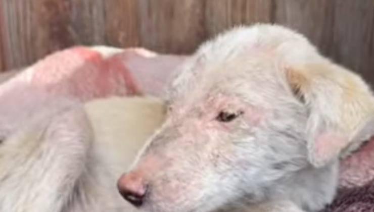 cagnolino ferito e triste (Foto video)