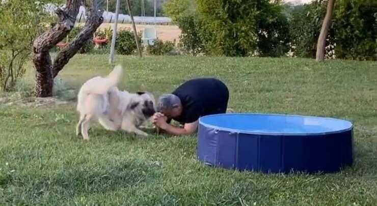 Marco il marito di Benedetta Rossi implora Claud per entrare in piscina (Screen Video )
