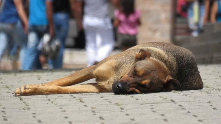 mazara del vallo massacra cane