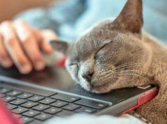 narcolessia gatto