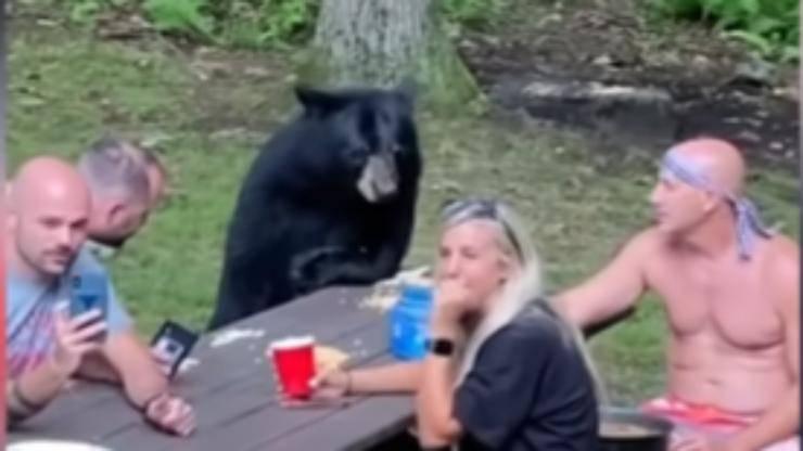 L'orso al banchetto (Foto video)