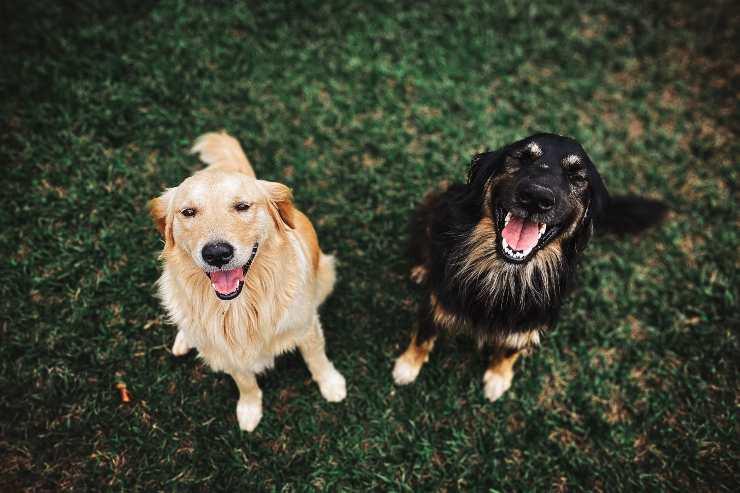 Cani che non richiedono impegno