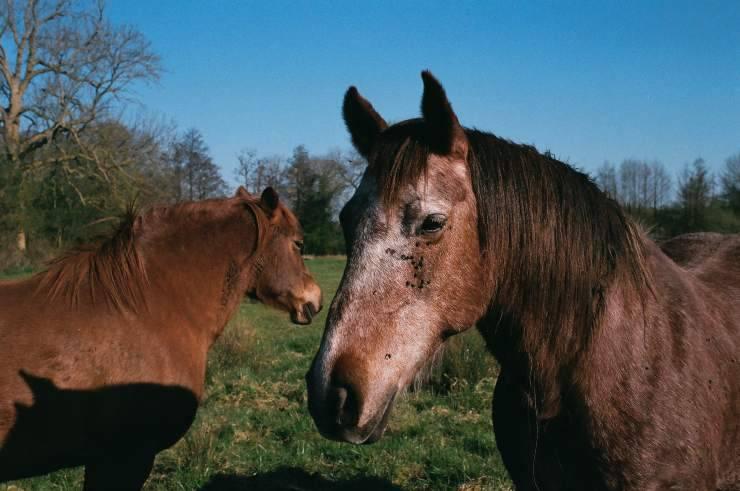 Proteggere il cavallo durante l'estate