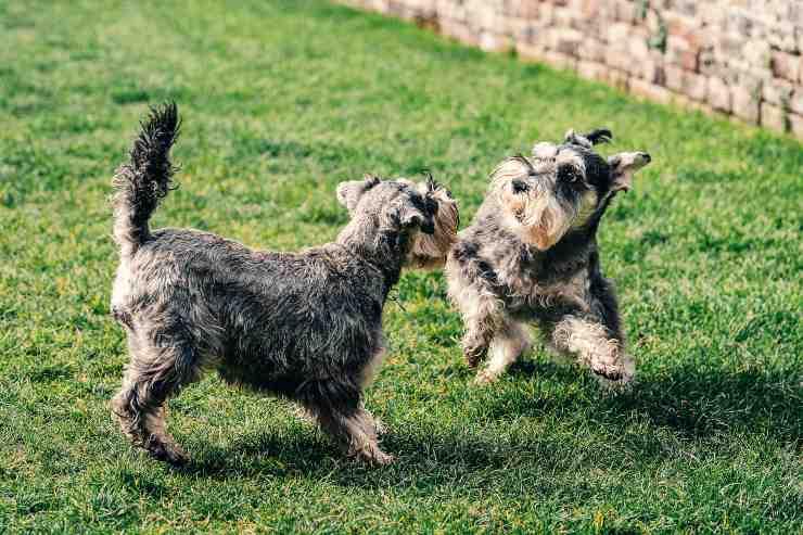 Razze di cani che devono fare più esercizio