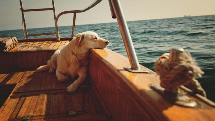 portare il cane in barca