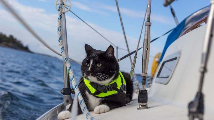 portare il gatto in barca