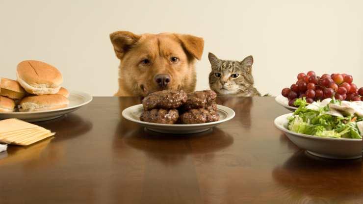 ricette al tacchino per cani