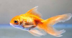 sensi del pesce