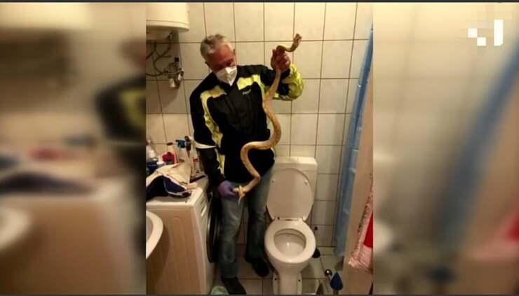 Serpente nel Wc (Screen Video