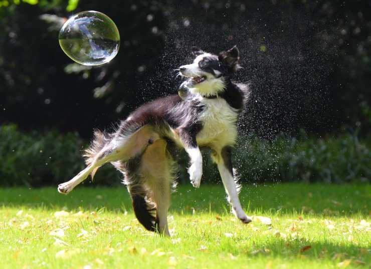 Cagnolino gioca con le bolle di sapone